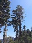 erasepic_trees